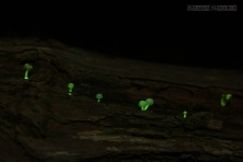 glowing mushroom light