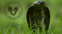 Naja_siamensis3_logo