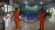 Reticulated python M. reticulatus